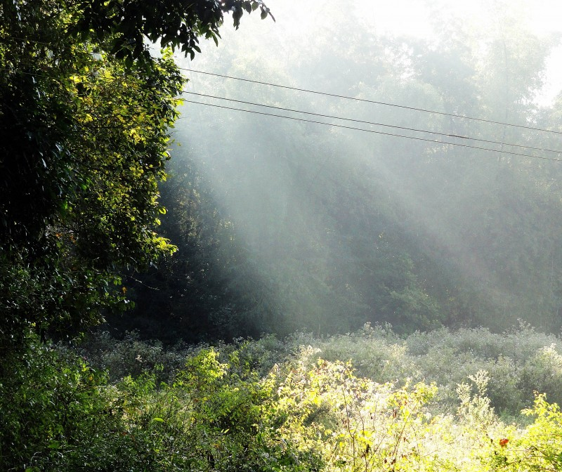 early moring in forest