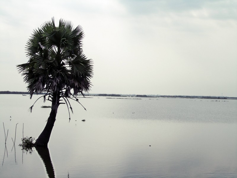 west godavari kolleru lake